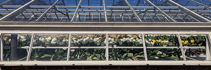 Does-a-Greenhouse-Need-a-Clear-Roof