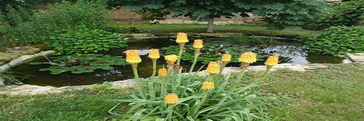 Should-a-Garden-Pond-Be-in-the-Sun-or-Shade