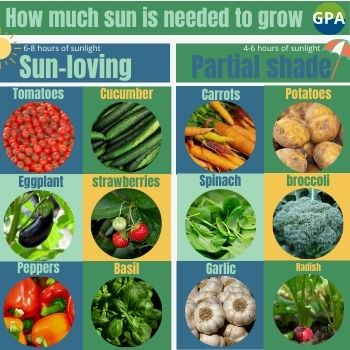 full-sun-partial-shade-vegetables-grow-greenhouse