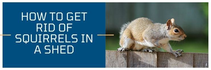 How to Get Rid of Squirrels in a Shed